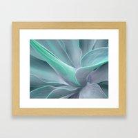 Blue Green Agave Attenua… Framed Art Print