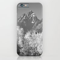 White Trees iPhone 6 Slim Case