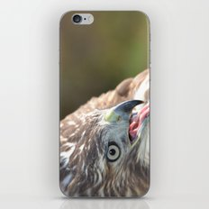 Red Tailed Hawk Close Up iPhone & iPod Skin