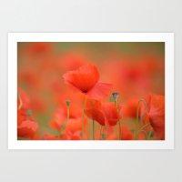 Common red poppies 1876 Art Print