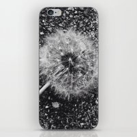 Dandelion in black and white iPhone & iPod Skin
