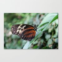 Butterfly Perching Canvas Print