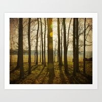 Afternoon Sunlight With … Art Print