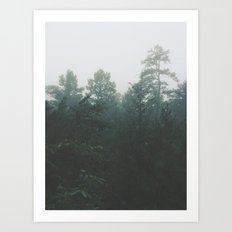 Pine Trees through the Mist Art Print