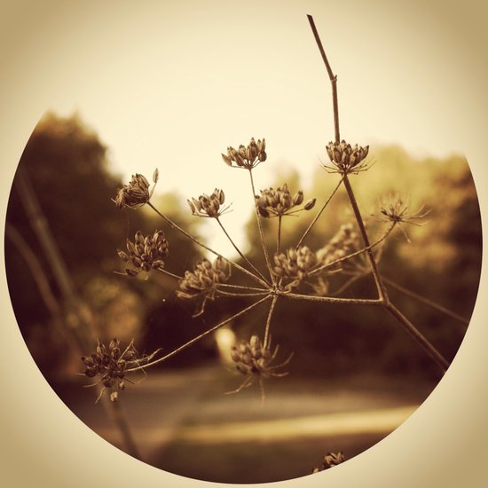Delicate Branches Art Print