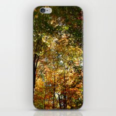 Through the Trees in October iPhone & iPod Skin