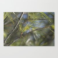 Canvas Print featuring Pine by Ornithology