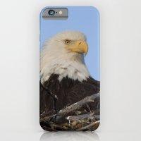 Eagle's Nest iPhone 6 Slim Case