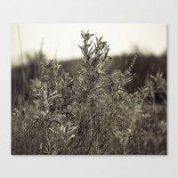 Fall Textures Canvas Print