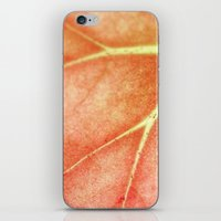 Begonia  iPhone & iPod Skin