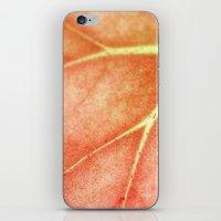 Begonia  iPhone & iPod Skin