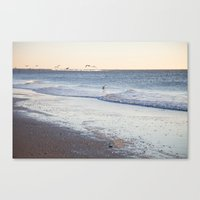 Birdy Beach  Canvas Print