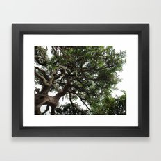 Bonsai Tree Framed Art Print