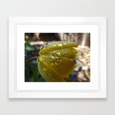 Water Drops On  A Tulip Framed Art Print