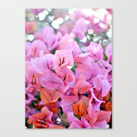 Bougainvillea II Canvas Print