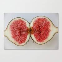 Fig 1 Canvas Print