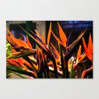 Birds o Paradise Canvas Print