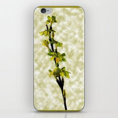 Winter Jasmine  iPhone & iPod Skin