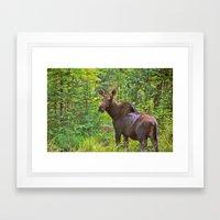 Angry Moose Framed Art Print