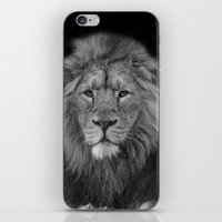Asiatic Lion iPhone & iPod Skin