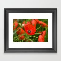 Wild Red Poppies Framed Art Print
