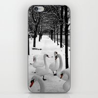 Swans In The Snow iPhone & iPod Skin