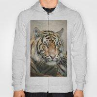 Tiger Looking Hoody