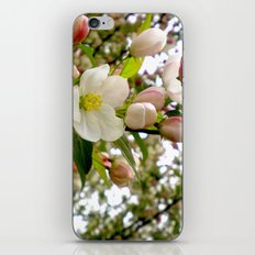 Spring Forward iPhone & iPod Skin