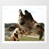 Giraffe Attitude  Art Print