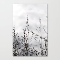 Grey Grasses Canvas Print