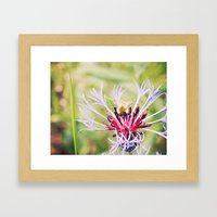 Spring Time Bumble Bee on a Purple Flower Framed Art Print