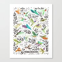 Hummingbirds of North America Field Guide  Canvas Print