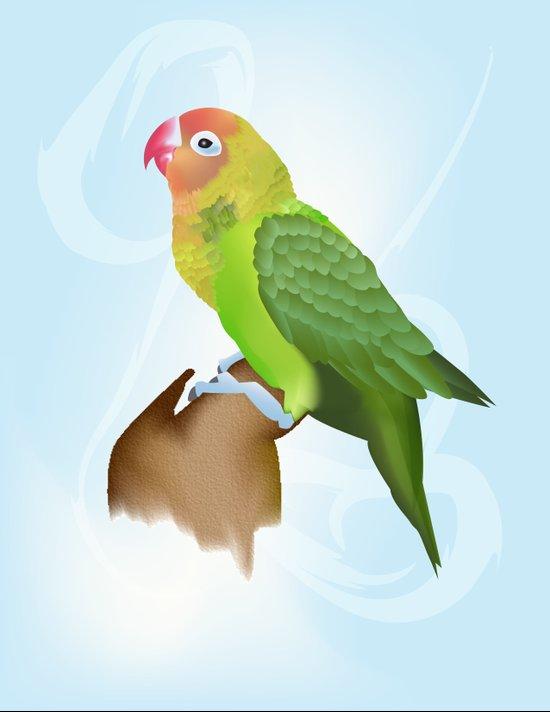 Parakeet Art Print