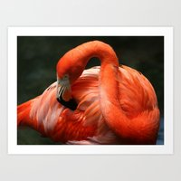 Flamingo # 2 Art Print