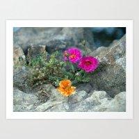 Rock Rose Art Print