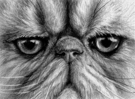 Persian Cat B&W 831 Art Print