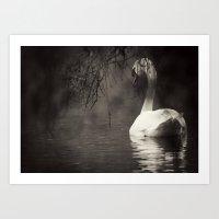 Secret Swan Art Print