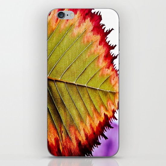 Fall Splendor iPhone & iPod Skin