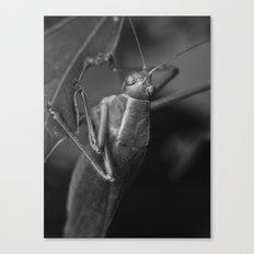 grasshopper 2016 II Canvas Print