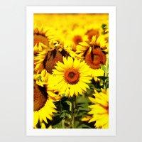 Summer Life: Sunflower  Art Print