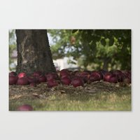 Under The Apple Tree Canvas Print