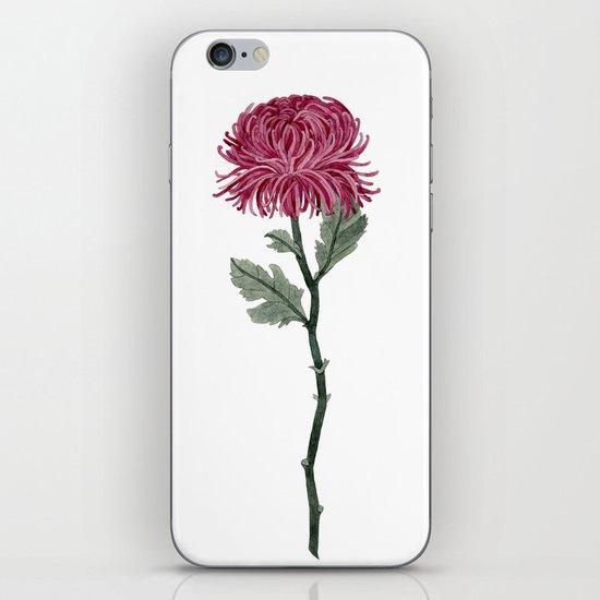 Pink Chrysanthemum iPhone & iPod Skin