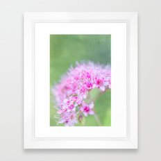 Spirea Framed Art Print