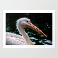 the pelican Art Print