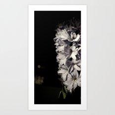 Hyacinth 13 Art Print
