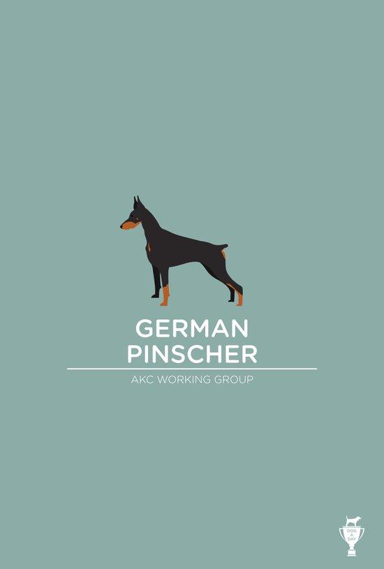German Pinscher Art Print