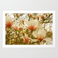 Peach Magnolia  Art Print