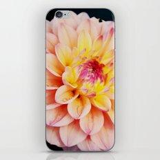 Light Pink Dahlia #2 iPhone & iPod Skin