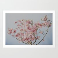 Pink Magnolias Art Print