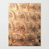 Pine cone pattern Canvas Print